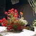 Alp Fless Dadora et ses magnifiques fleurs vivantes
