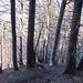 Beim steilen und weglosen Aufstieg Richtung Guschaspitze waren die Stöcke sehr hilfreich