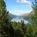 Sopra le punte dei larici inziano a spuntare i più grandi dei laghi engadinesi, quelli di Silvaplana e di Sils