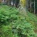Waldaufstieg zum Ringspitz