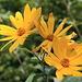 Blumen am Perlacher Mugl