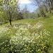 Durch blühende Wiesen