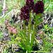 Blumen entlang dem Oberaarsee I