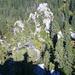 Schatten und Gipfelkreuz über dem Wald