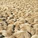 Piccole dune erbose