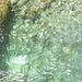Se tutti gli affluenti della Verzasca sono così, si capisce perché le sue acque hanno quel colore…