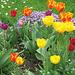 Frühlingsblumenpracht