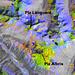 Falschfarben-Satellitenbild der Region