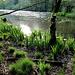 Wo vor wenigen Wochen noch winterlich farbloses Ambiente vorherrschte, grünt und sprießt es jetzt an allen Ecken und Enden!