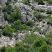 Hier spaziert ein Steinbock in den Felsen herum