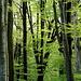Im Kühler Wald