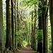 Hier beginnt die schöne Buchenallee mitten im Wald!