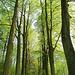 Noch kleines hellgrünes Mai-Laub lässt selbst zur späten Tageszeit noch recht viel Licht durch.