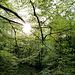 Lichterfüllter Frühlingswald!