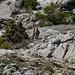 Beobachtet von Steinböcken (Capra pyrenaica hispanica)