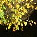 Herbstliche Blätter über dem Schwendi-Bach