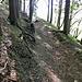 Spuren eines Schützengraben von 1914 im Bereich des gesperrten Wegs