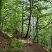 ... und im Wald