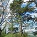öfters mal Ausblicke nach Westen; auch hier wachsen einzelne markante Föhren am Grat