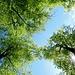 genussvolle Mittagsrast unter diesem prächtigen Blätterdach bei Sonnenschein