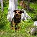 Ein glücklicher Hund auf Wanderschaft