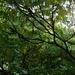 Im Essigbaum-Dschungel auf dem Falkenberg.