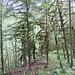 alberi muschiati
