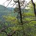 Auf dem Bergwanderweg in Richtung Rütiwis.