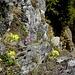 prächtige Flora - am Abgrund
