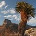 Nach der Tour - Ausblick zu El Capitan (2.464 m/8.085 ft) aus etwa südsüdöstlicher Richtung. Der Guadalupe Peak (2.667 m/8.749 ft) befindet sich im Hintergrund.