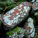 Rotweisse Wegmarkierung nature