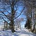 Mit Schneeschuhe zur Höchhand 1314m