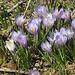 In Bourg Saint-Bernard beginnt der Frühling