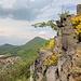 Gipfelbereich Ostrý - Ausblick vorbei an schönen Basaltformationen westlich des höchsten Punktes in Richtung Dorf Milešov sowie zu den Bergen Milešovka und Francká hora (Zvon).