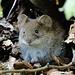Das hübsche Mäuschen zeigte sich von unserem Besuch wenig beeindruckt.