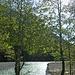 Fotos von [u 83_Stefan]: Frühling am Rissbach.