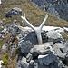 Gipfelgeweih am Nördlichen Stuhlkopf.