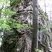 Finalissima des Bützi-Abstiegs, bevor's durch den Wald zur Stockflue geht