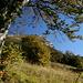 schöner herbstlicher Wald auf dem Weg zum Monte Stivo