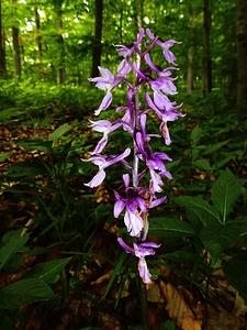 Der Orchideenfreund kommt bei dieser Tour ganz besonders auf seine Kosten