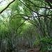 Parte boschiva del sentiero