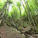 Abstieg durch den Wald von Twäriberg nach Goldau