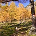 Der Herbst, einfach traumhaft in seinem Farbenspiel