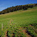 """Von den Alphütten """"Grosse Bäder"""" Pt1661 zum Wald Pt1745"""