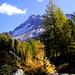 Duch diesen Park steigt der Weg zum Lagh da Val Viola. Corno di Dosde.