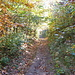 immer wieder sanfte Anstiege in schönem Laubwald