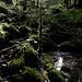 Unberührter Wald