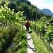 Maiser Waalweg durch Reben und Obstbäume