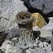 Mitten in der Steinwüste auf einmal ein Kakteenähnliches Gewächs
