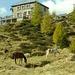 Capanna Alpe Sponda